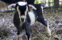 Monday Morning Fun: Farm Visits Baby Animals